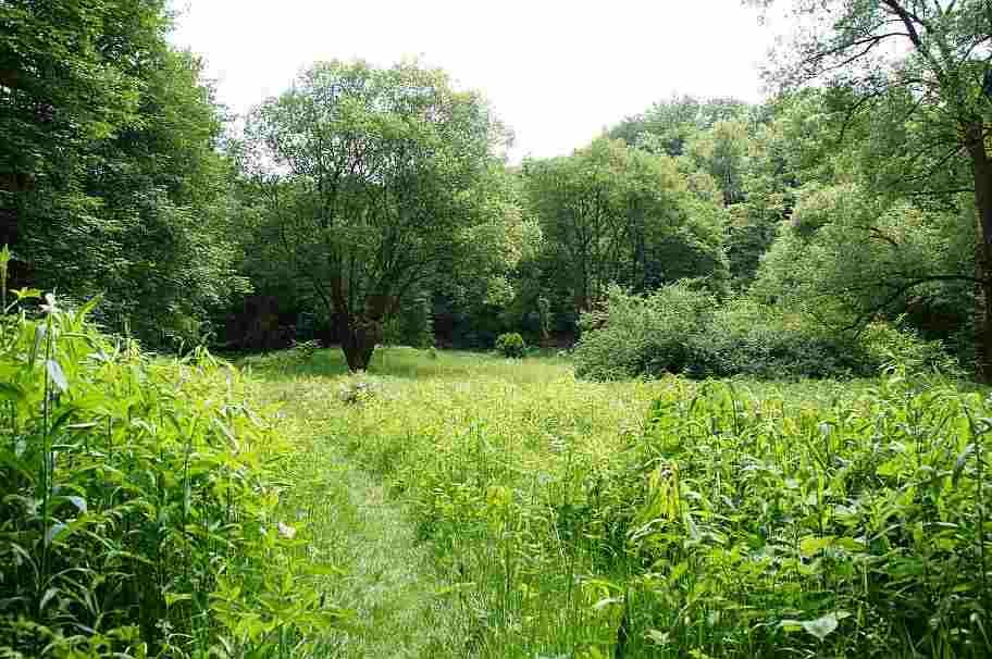 Feuchtwiese im Wannebachtal: Blick auf den nördlichen